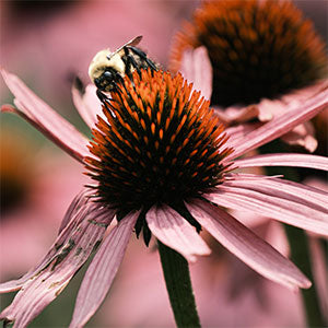 Close-up of a flower and bee by Jerred Zegelis