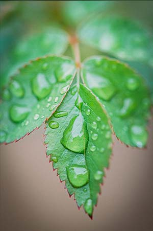 Water on a leaf by Jerred Z taken with Nikon Z5 and 105mm f/2.8 macro