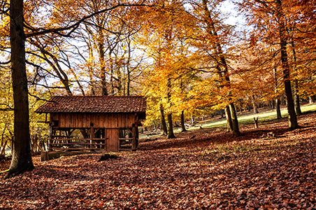 Autumn image of beautiful trees and cabin