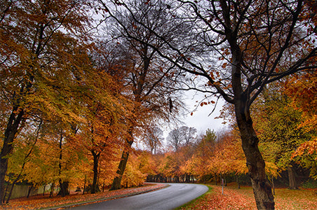 Autumn Image with Road for Leading Line