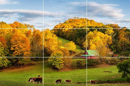 Fall image showing the rule of thirds