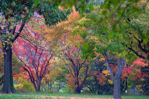 Image of Autumn colored trees by J. Michael McBride