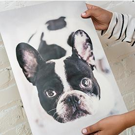 Metal Print with a Dog on the front