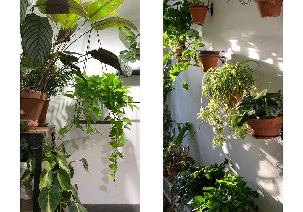 indoor plant styling hanging plants
