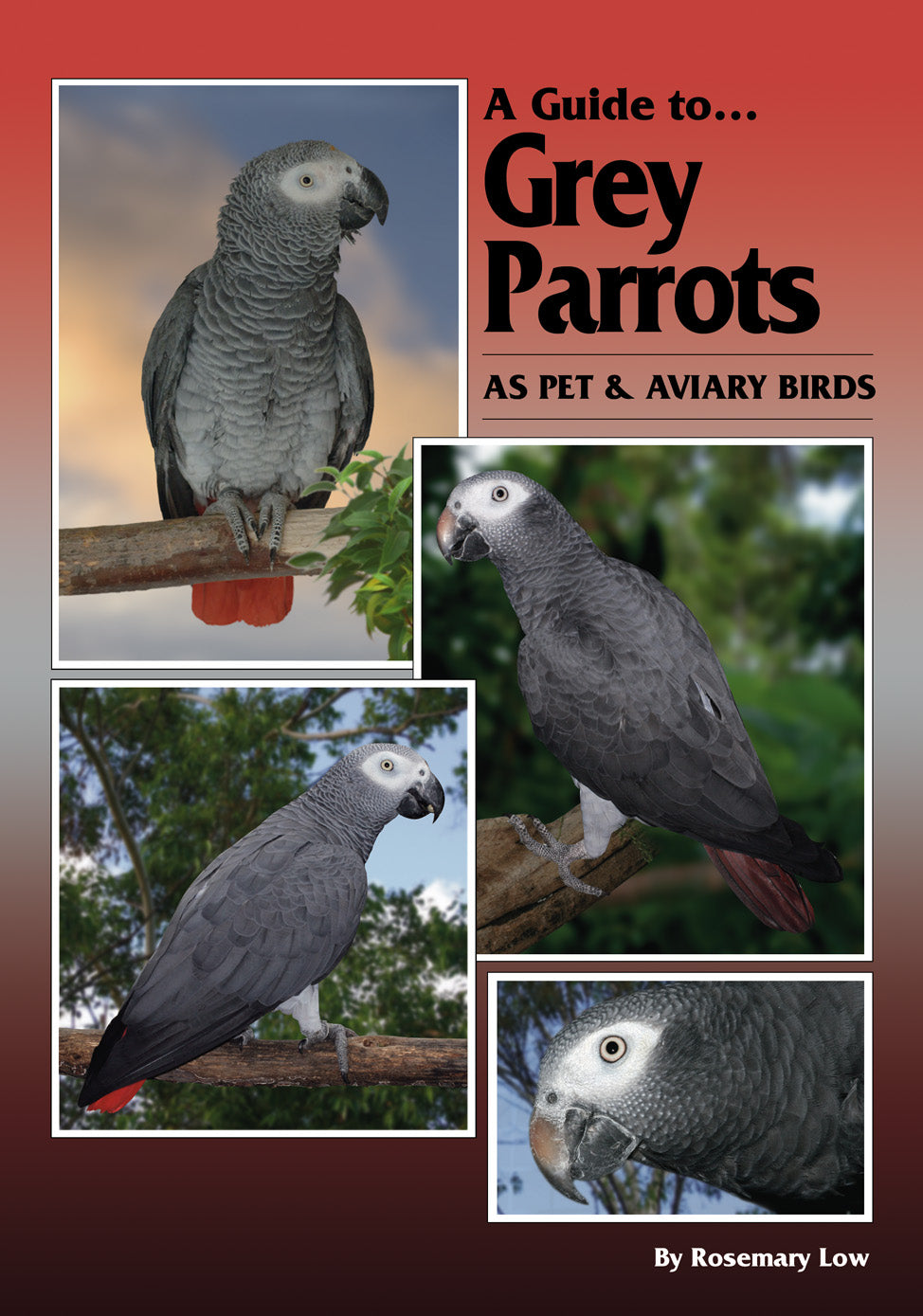 A Guide to Grey Parrots as Pet and Aviary Birds (Hard Cover)