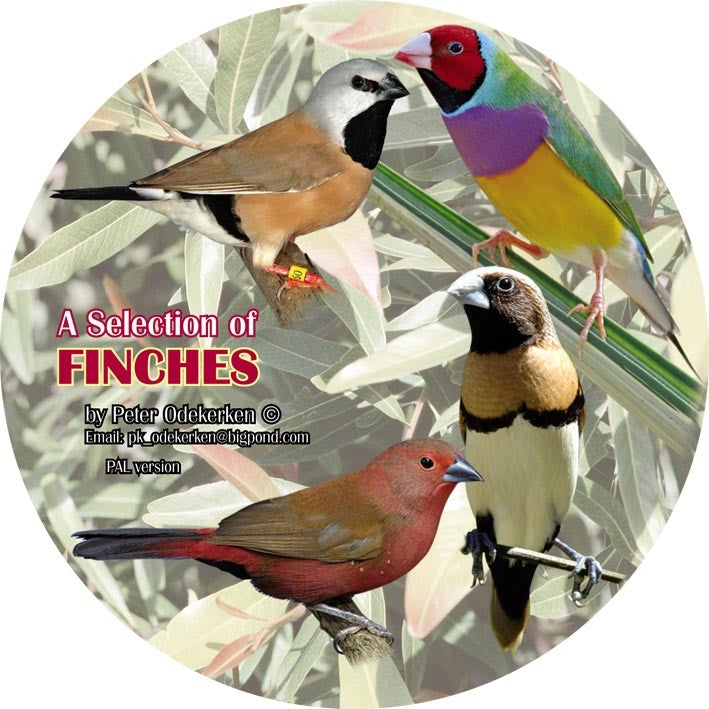 DVD—A Selection of Finches (80 Minutes)
