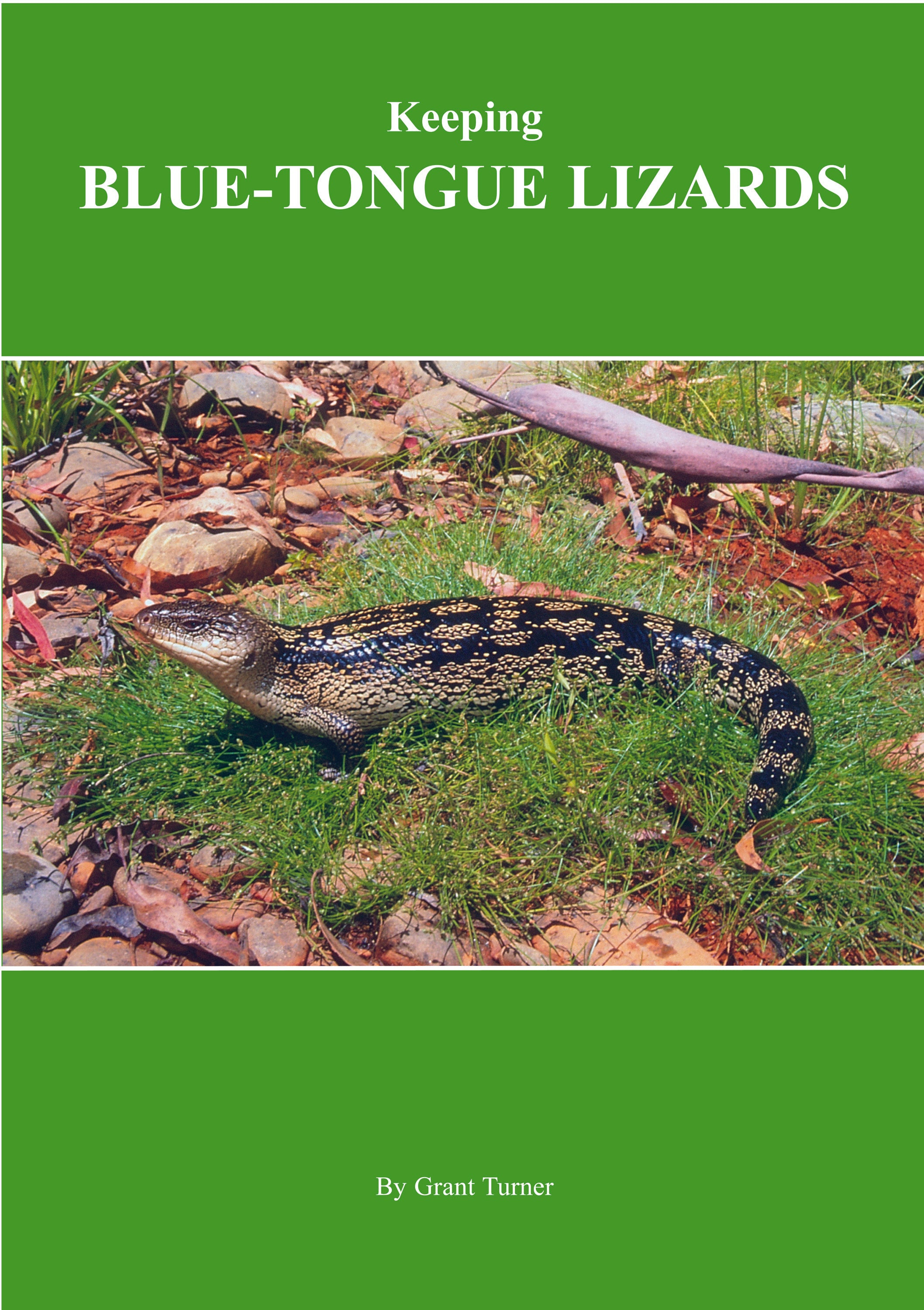 Keeping Blue-tongue Lizards