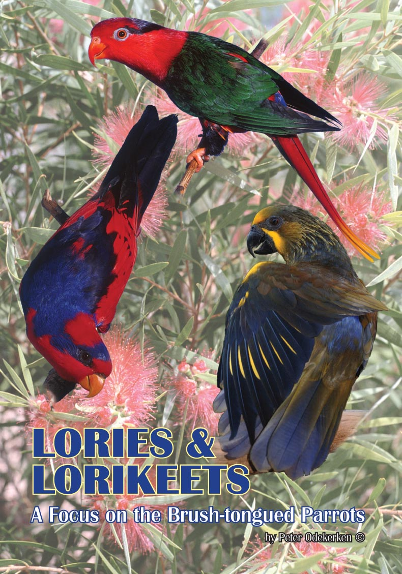 DVD—Lories and Lorikeets—A Focus on the Brush-tongued Parrots (55 mins)