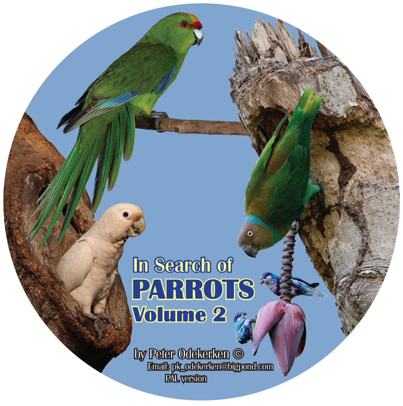 DVD—In Search of Parrots Volume 2 Non Australian Parrots (40 mins)
