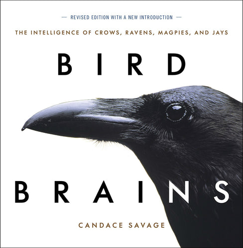 Bird Brains  - The Intelligence of Crows, Ravens, Magpies, and Jays