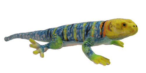 Collared Lizard Conservation Critter