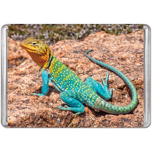 Collared Lizard Mini Puzzle