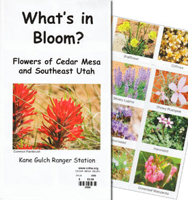 What's In Bloom? Flowers of Cedar Mesa and Southeast Utah