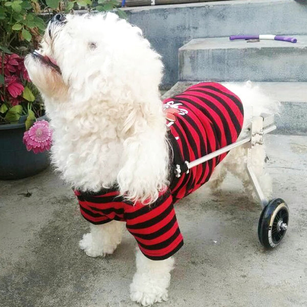 Wheel Handicapped Paralyzed Pet Wheelchair Dog Scooter