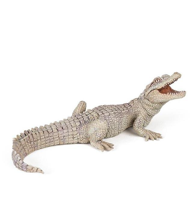 White Baby Crocodile