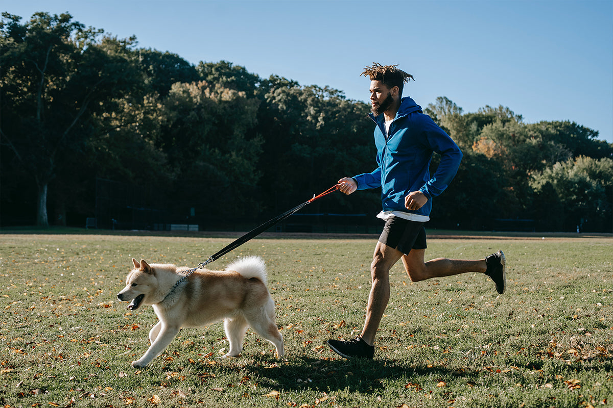 Boldnine blog : One man is running with his dog for miracle morning routine.
