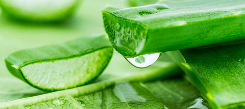 Green color fresh Aloe Vera photograph is used to symbolize as one of best Moisturizer ingredients for the dry skin