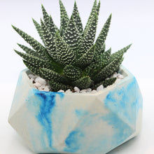 Load image into Gallery viewer, Blue Marble Geometric Concrete Planter with Haworthia