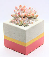 Load image into Gallery viewer, Cube Concrete Planter with Korean Succulents.