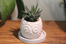 Load image into Gallery viewer, Handmade Owl Planter with Succulent