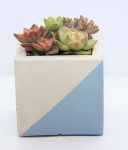 Cube Concrete Planter with Mixture of Succulents.