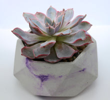 Load image into Gallery viewer, Geometric Concrete Planter with Korean Succulent.