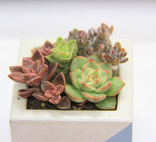 Load image into Gallery viewer, Cube Concrete Planter with Mixture of Succulents.