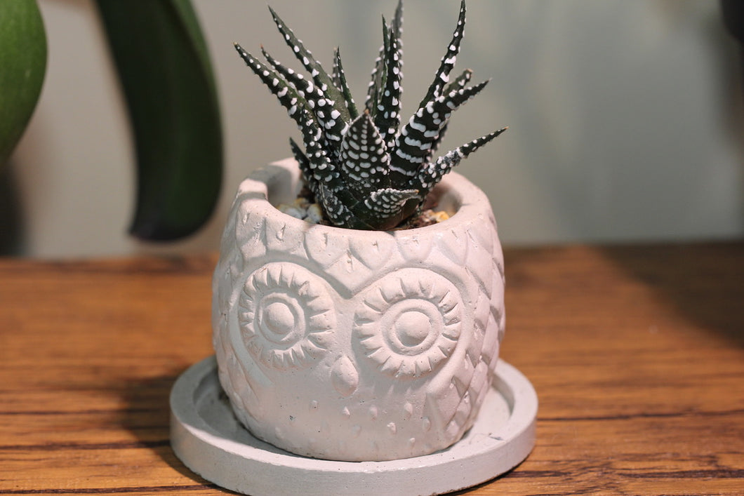 Handmade Owl Planter with Succulent