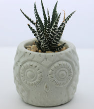 Load image into Gallery viewer, Handmade Owl Planter with Haworthia