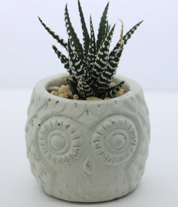Handmade Owl Planter with Haworthia