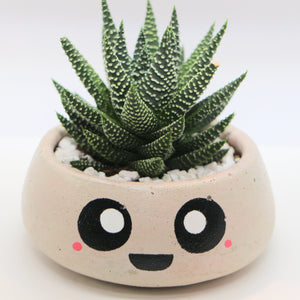Round Concrete Planter with Haworthia