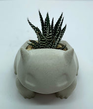 Load image into Gallery viewer, Bulbasaur with Haworthia