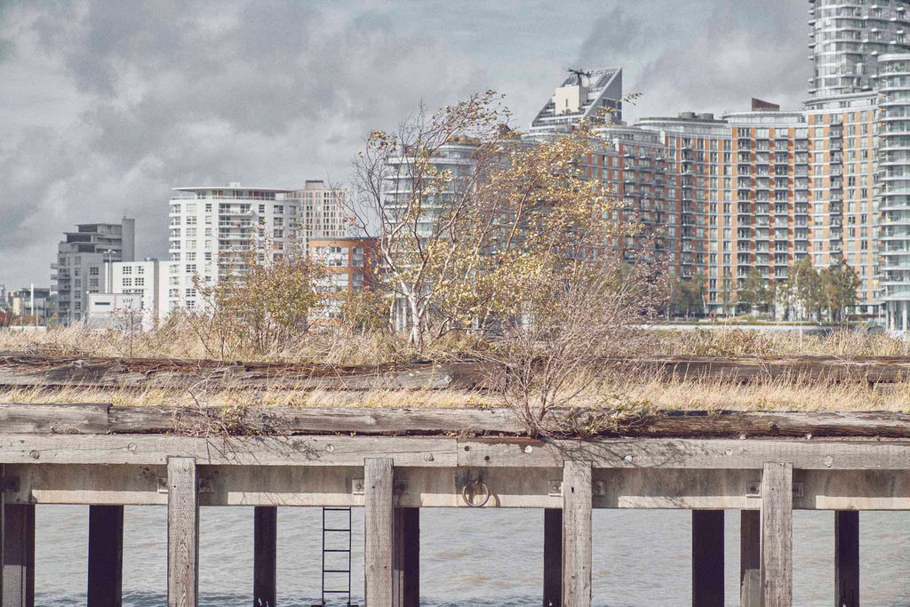 Shrubs grow on an old River Thames pier with a London Docklands cityscape behind