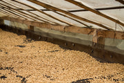 The coffee was carefully dried on raised beds over 20-30 days.