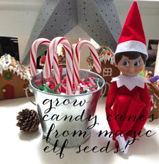 Plant your own magic elf seeds!