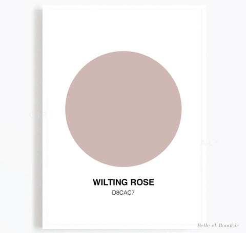 Colour Series - Wilting Rose
