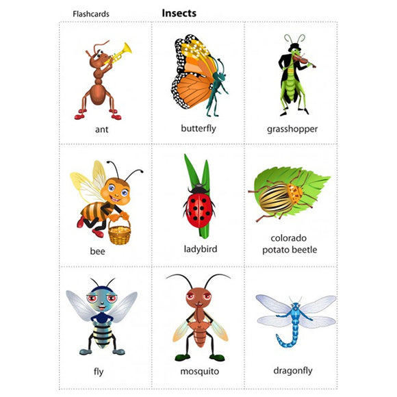 Flash Cards Insects - Assorted - naiton
