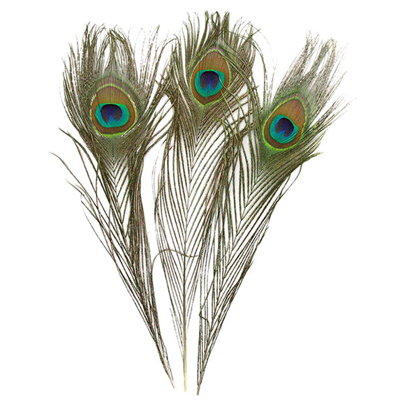 Peacock Feather (1pcs)