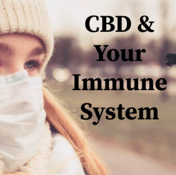CBD and the immune system: How it works