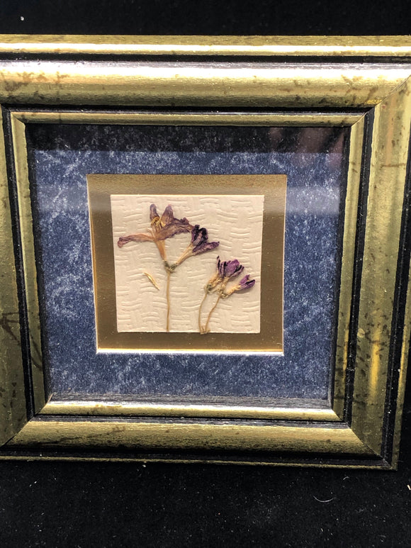 Framed Flower Portraits