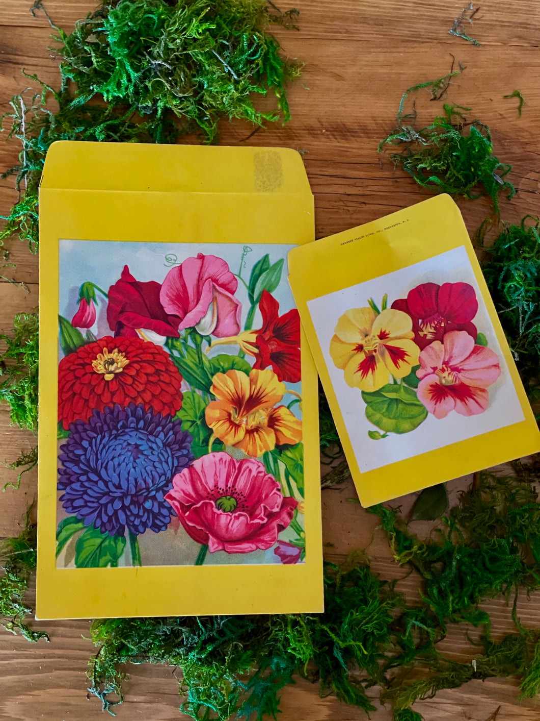 Vintage Flower Seed Packets - Set of 2  Flower Art