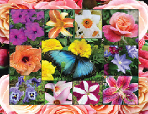 500 Piece Puzzle - In Bloom