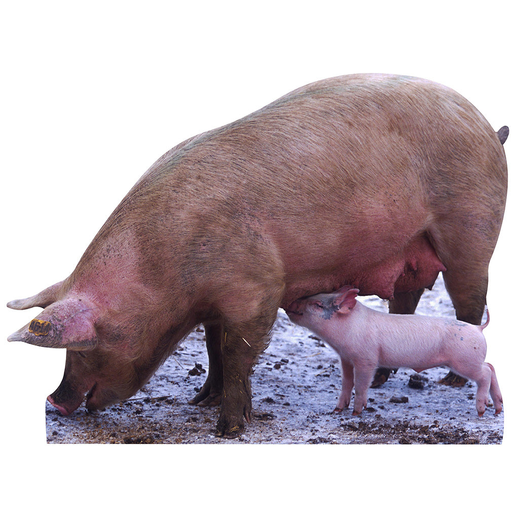 Pig with Piglet