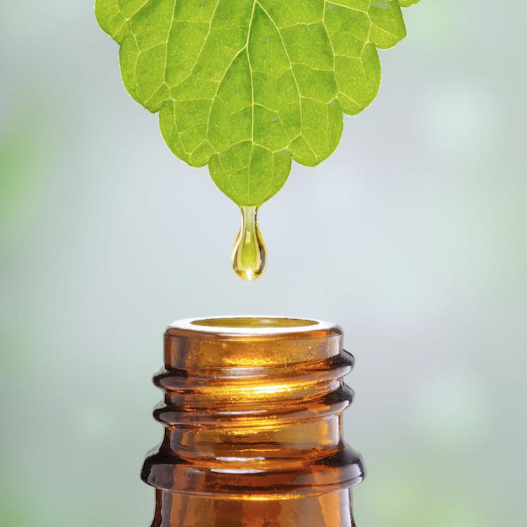 The benefits of plant extracts and why we choose to use them in our products
