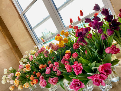 Speciality Tulip Bouquet Subscription