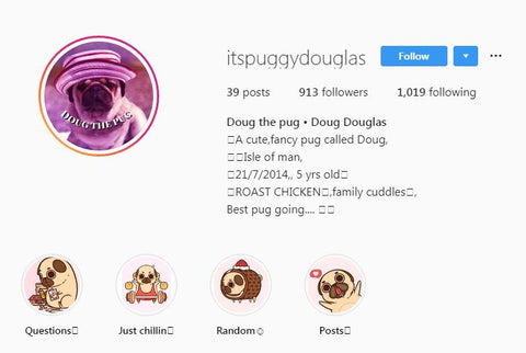 Pug Themed Instagram Account