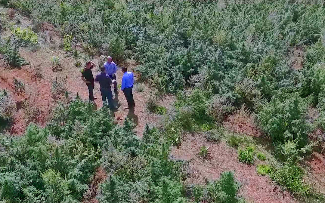 Cannabis Industry Pioneers Visit Ananda Hemp Farm