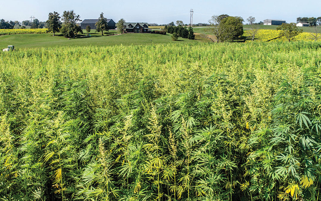 history of hemp in kentucky
