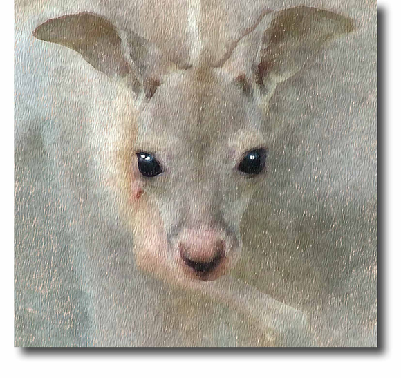 collections/Australian-Wildlife-png-300x283.png