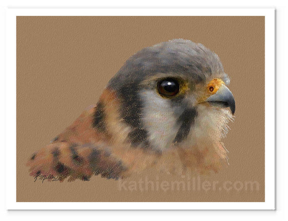 American Kestrel painting by award winning artist Kathie Miller.
